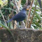 Birding in Pokhara