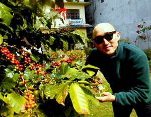 Guest with Coffee Tree